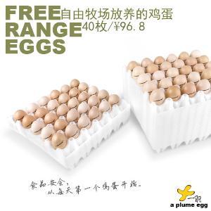 一羽自由牧场散养鸡蛋包邮40枚装